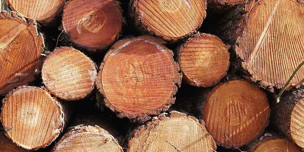 madeira desmatamento