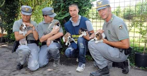 policia animais