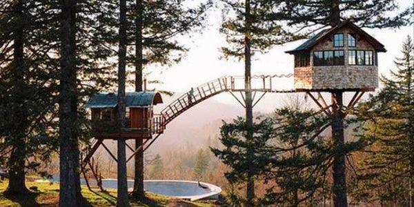 tree house capa