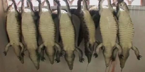 hermes crocodilos