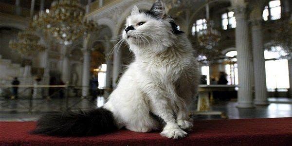 hermitage gatos