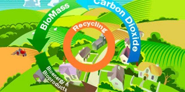 Não faltam terras para produção de bioenergia