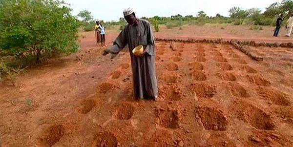 replantaram o deserto