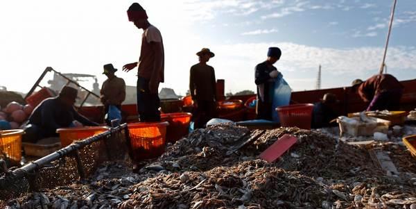 Trabalho escravo frutos do mar