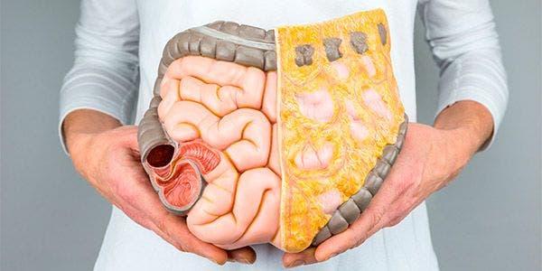 intestino humano