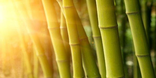 bambu-benefícios-qualidades