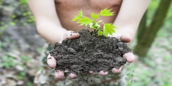 plantar-água