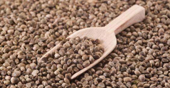 sementes-de-cânhamo