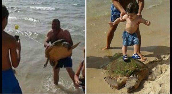 tartaruga-maldade
