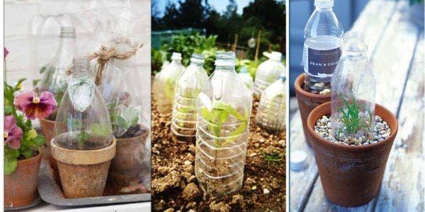 proteção-plantas
