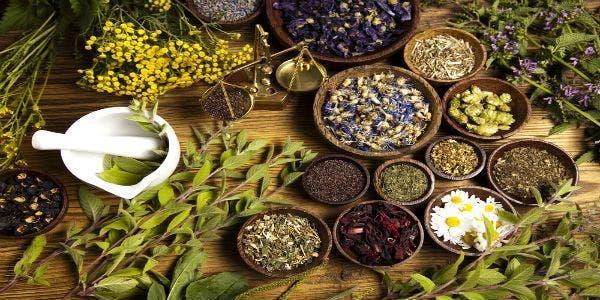 fitoterapia-plantas