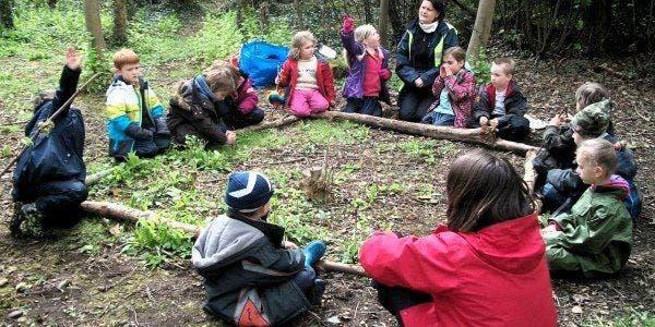escola crianças floresta 2