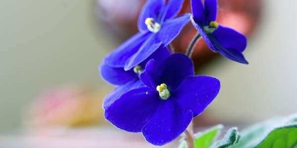 plantas-faceis-de-cultivar