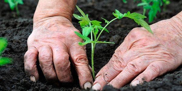 agricultura-sustentável