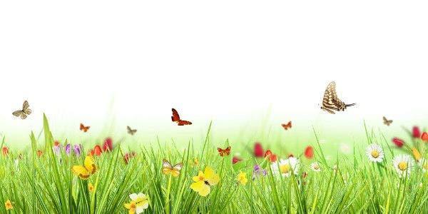 flores-borboletas