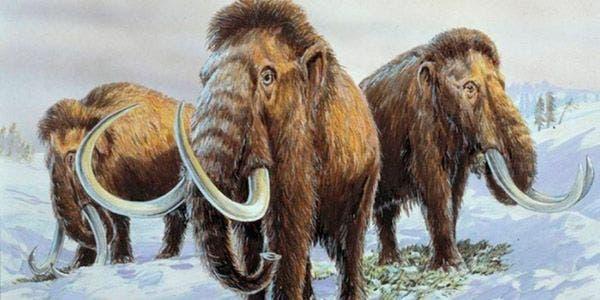 mamute-lanoso
