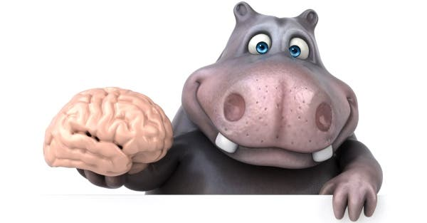 obesidade-cérebro