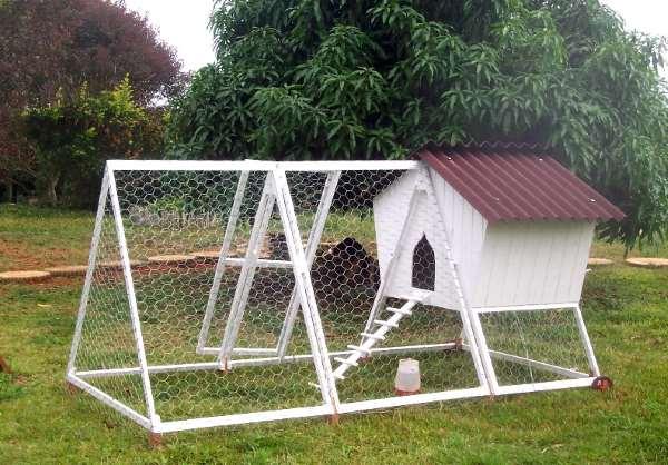 chickens tractor vista do outro lado