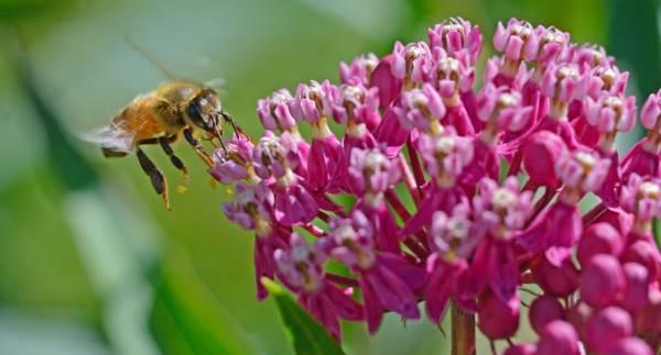 plantas-abelhas