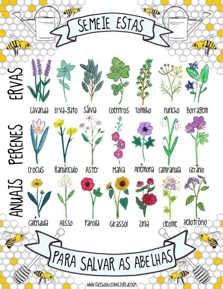 plantas abelhas