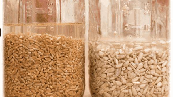 Deixar os grãos