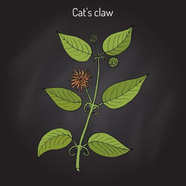 unha de gato 2
