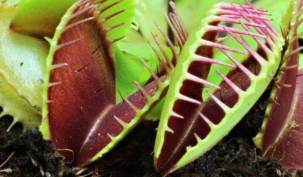 plantas carnívoras