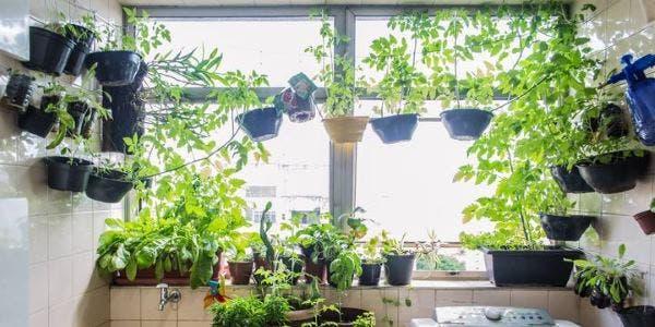 manter plantas em casa