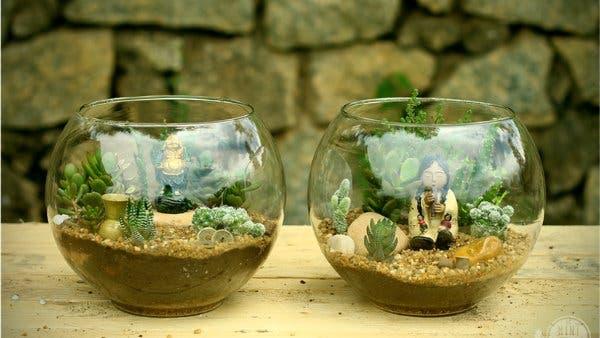 mini jardim suculentas