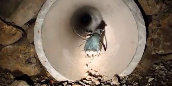 Túnel para pinguins