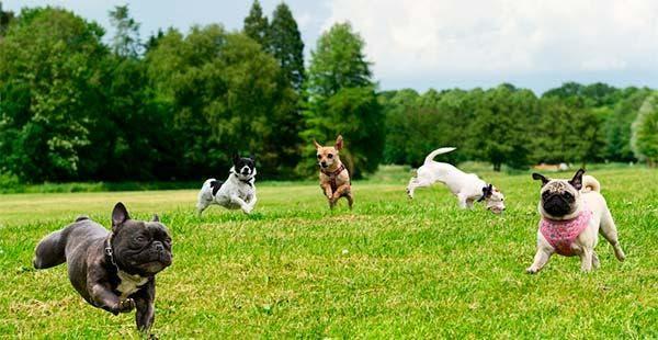 Cachorro no parque