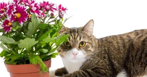 gato longe dos vasos