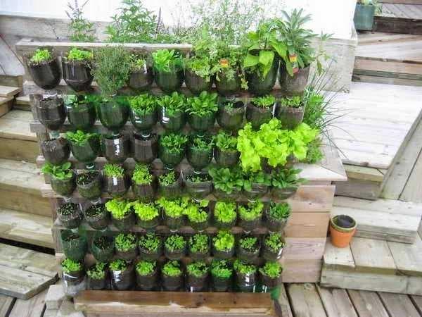 plantar feijao