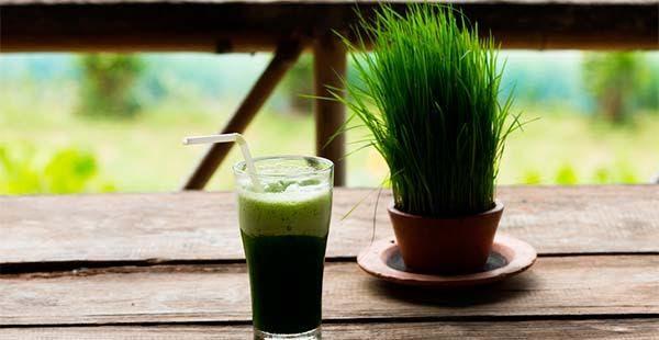 Suco verde de grãos germinados
