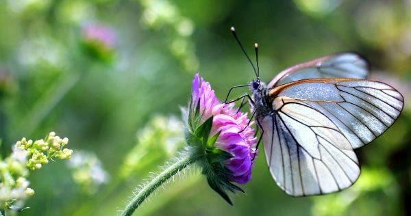 borboletas plantas 2