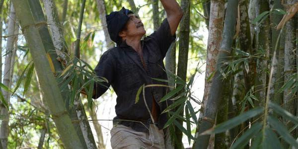 Indonésia florestal indígena