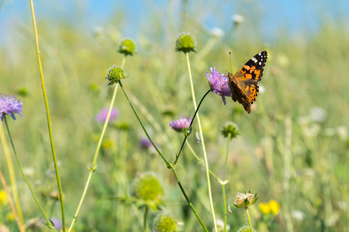 plantas-borboletas