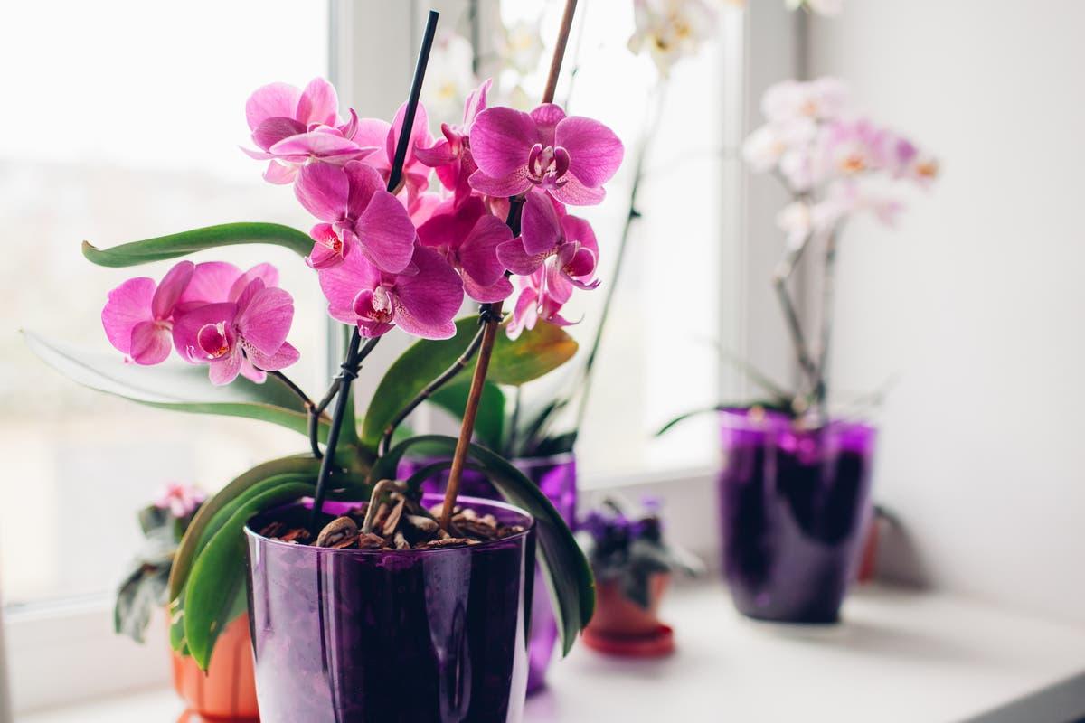 Plantas par presente