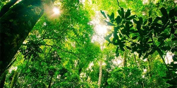 Brasil diversidade de árvores
