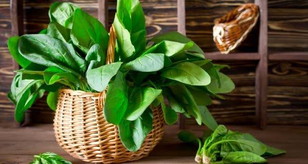alimentos naturais saudaveis e toxicos