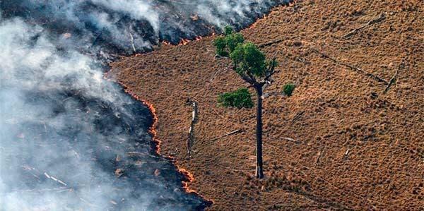 petição nenhuma árvore a menos