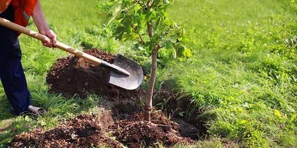 plantar arvores