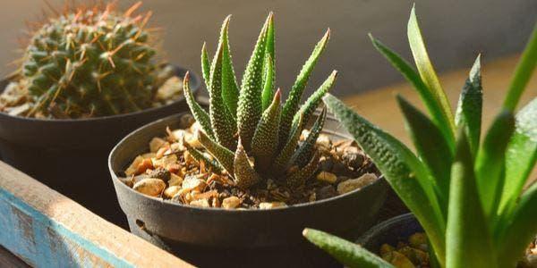 plantas certas