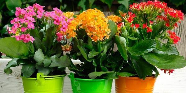 microclima planta
