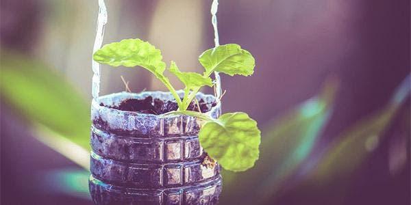plantar em garrafas pet