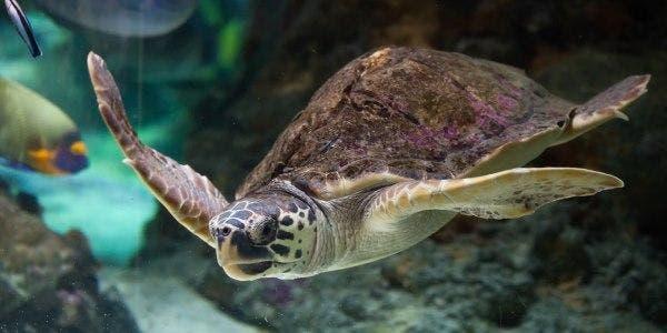 tartarugas e lixo no mar