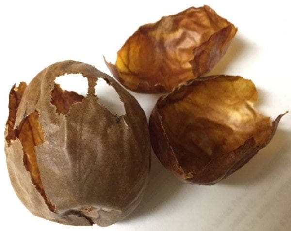 caroco abacate pele