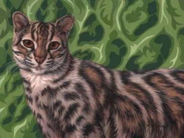 gato marmorizzato