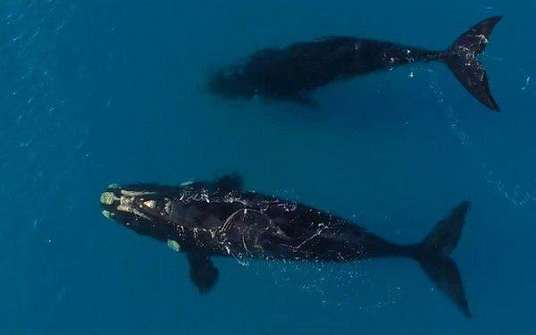 video baleia 2
