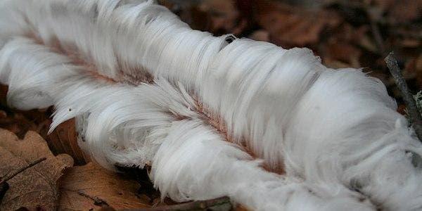 cabelo de gelo